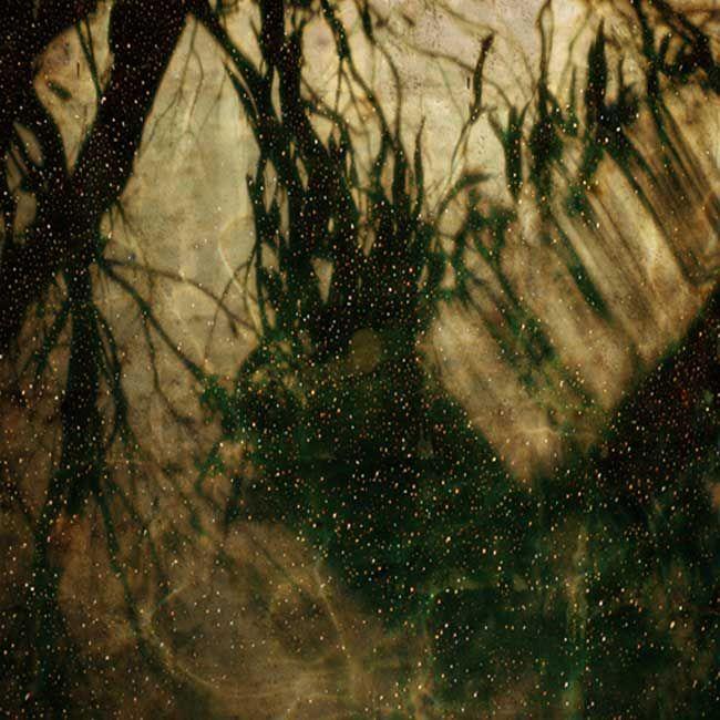 Bett Gallery Hobart - Troy Ruffels - Constellation #2 (Eucalyptus)
