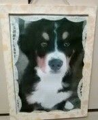 Rámeček s fotkou domaciho mazlíčka