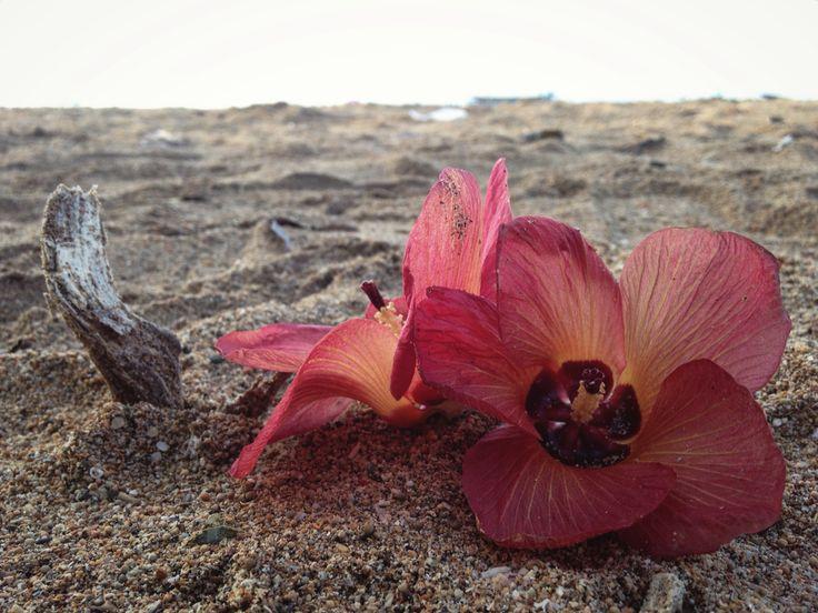 Flower on the beach