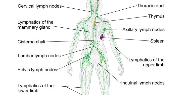 Your body's lymphatic system is the drainage system for both normal and abnormal metabolic toxins - and even more so if there are health issues. Lymph notes provide antigens for purifying fluid containing anything from allergens to cancer cells... [read more]