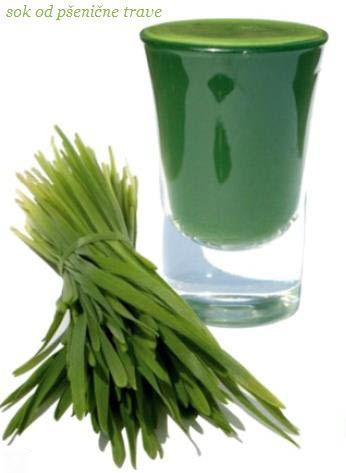"""SOK OD PSENICNE TRAVE KAO LEK  Sok od psenične trave moze biti jedna od najboljih """"superhrana"""" za čišćenje limfne tečnosti. Dakle, ako patite od limfnog zagušenja, povezanog sa stanjima kao što su upala grla ili natečeni limfni čvorovi, svakodnevno koriščenje ovog izuzetnog soka može da bude rešenje"""