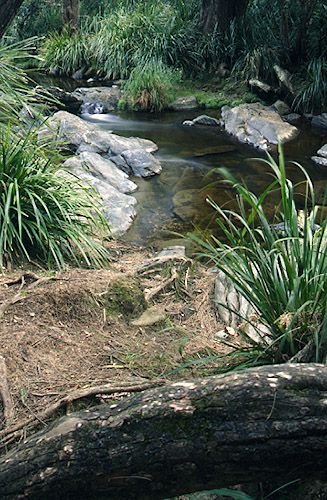 Creek at Rocksberg, QLD Australia