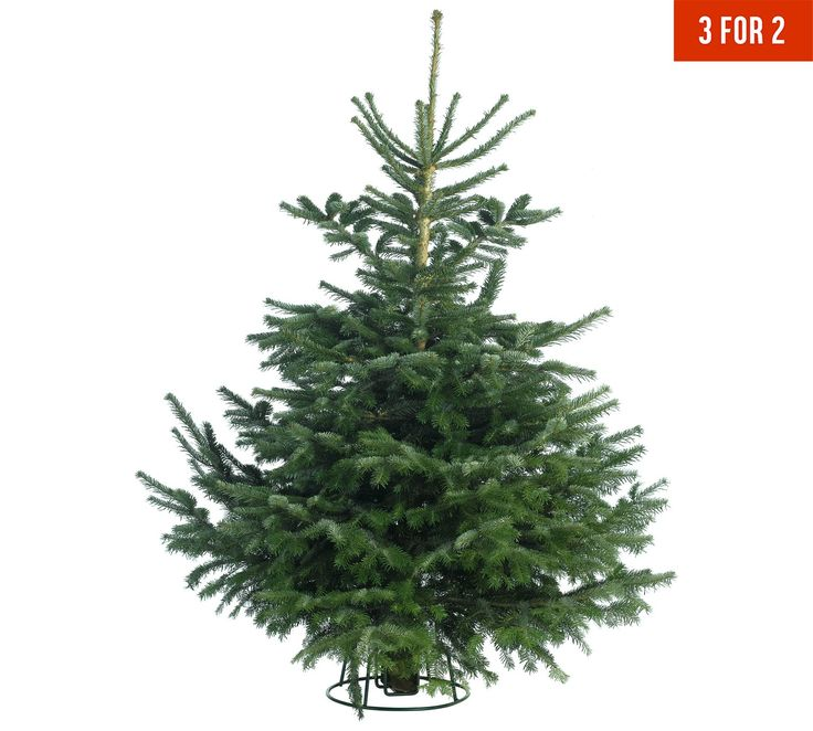 Argos Christmas Light Decorations: Best 25+ 8ft Christmas Tree Ideas On Pinterest