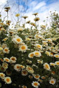 love daisy's..... by Mandy Jones www.thephotographerblog.com