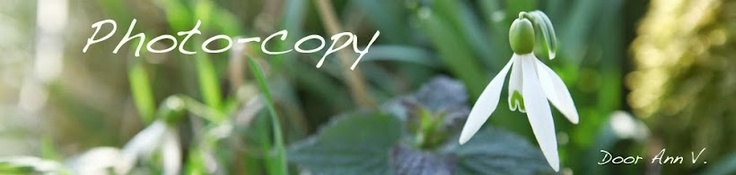 Geitenkaasquiche met groene asperges