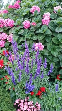 Flowers in the central garden, The Cedarwood Inn and Suites | 9522 Lochside Drive, Sidney, Bri
