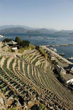 日本の原風景を探して、四国の西、南予へ。急斜面を拓いて作られた段畑ではジャガイモを栽培していた。高いところでは60mもある。向こうには養殖筏を浮かべる宇和海が。(写真/今津聡子。BRUTUS最新号「旅に行きたくなる」より)  【BRUTUS編集長 西田善太】 lexus.jp/... ※掲載写真の権利及び管理責任は各編集部にあります。LEXUS pinterestに投稿されたコメントは、LEXUSの基準により取り下げる場合があります。
