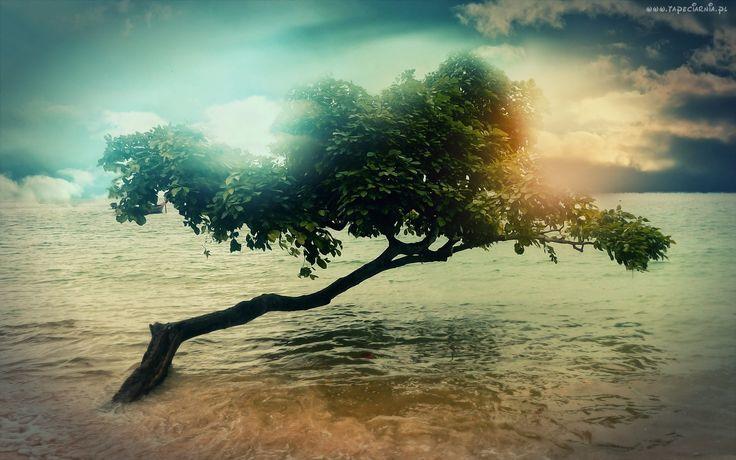 Morze, Drzewo
