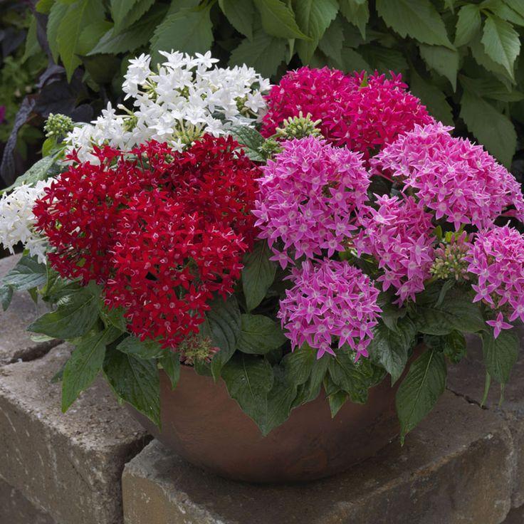 15 Amazing Spilling Flower Landscape Design Ideas: 212 Best Images About Flower Garden Ideas On Pinterest