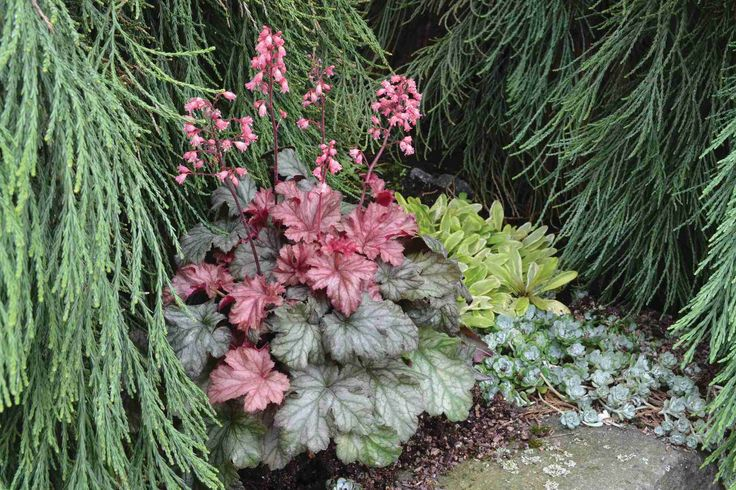 How To Turn Individual Varieties Into Great Combos [Slideshow]   Today's Garden Center