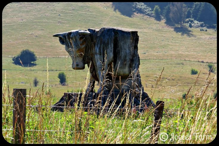 Jocees Farm: La Bull Fabulous bull sculpture we saw before we got to Tapawera, South Island, New Zealand.