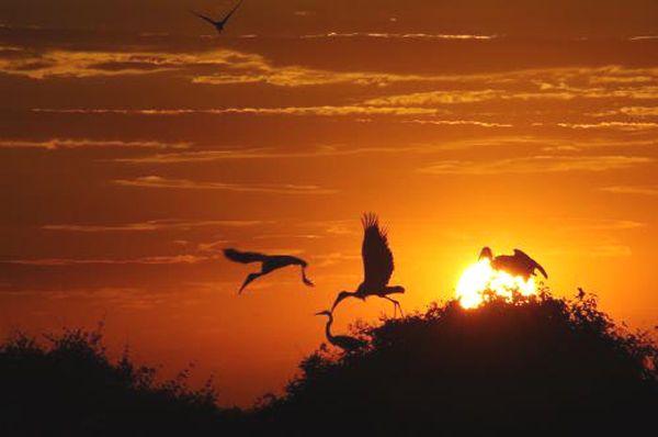 pantanal | os caminhos de rio, a vida que parece pulsar num outro tom, num outro ...