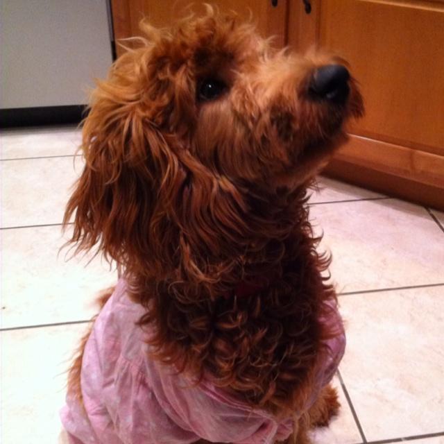 Mutt + Me Set • Dog Mom • Dog Mom Set • Scarf Season