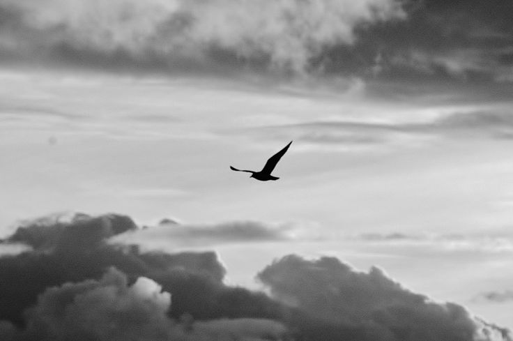 Seagull soaring over Oceanside, California.  Photography by David E. Nelson, 2006