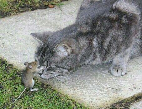Qui est l'idiot du village qui a décrété que les chats et les souris ne s'entendaient pas ?