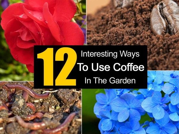 Best 25 Coffee Grounds Garden Ideas On Pinterest