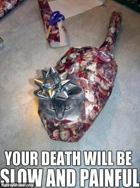 MEME – Angry Christmas Kitty