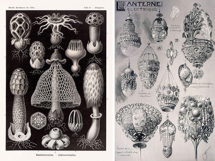 Avec ses fascinants dessins de créatures marines, Ernst Haeckel a su abolir la frontière entre art et science.