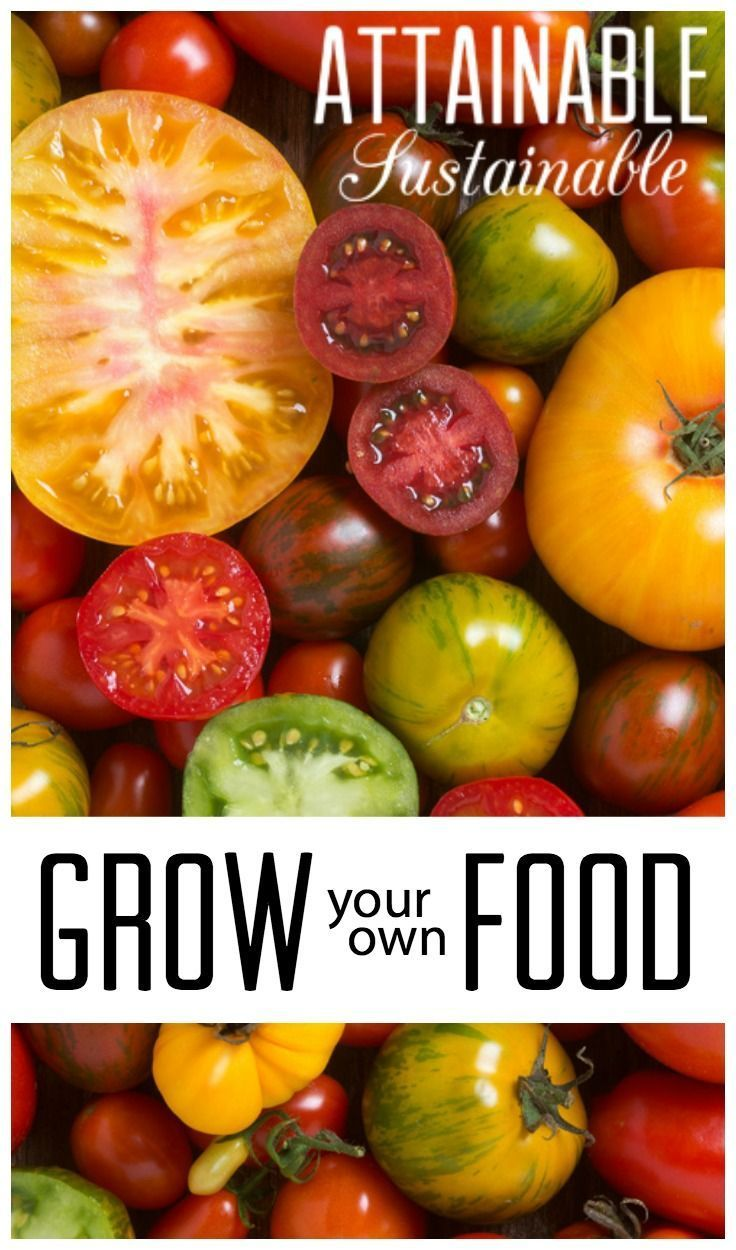 13 Reasons To Grow Food In Your Yard