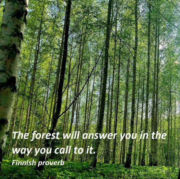 The culture of languages. Are they an opportunity or threat?  The diversophy translator provided reflections on the experience.  #languages @insight #interesting #Finland #forests #nature #proverbs #connecting #silence #Culture