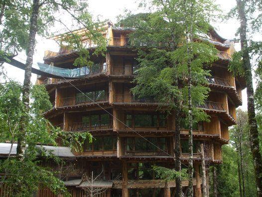 hotel montana magica chile | baobab, una maravilla esta conectado con el hotel montaña magica ...