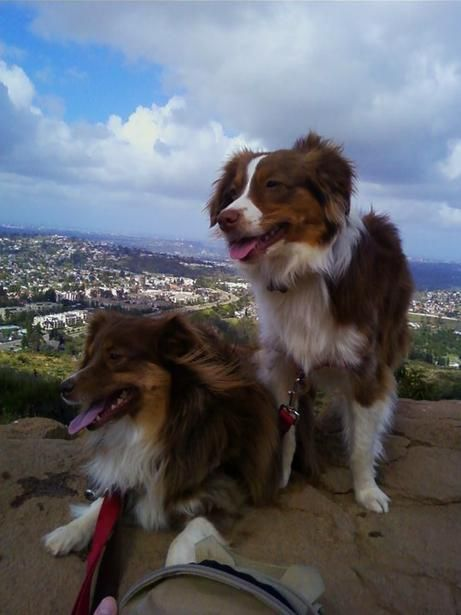 Dog Friendly Trails Worldwide If your dog likes to ruff it, bring Fido hiking the next time you're craving a little adventure. Our dog friendly hiking section includes everything from easy one-hour walks to fantastic overnight trips that won't be soon forgotten. Seriously, go take a hike!