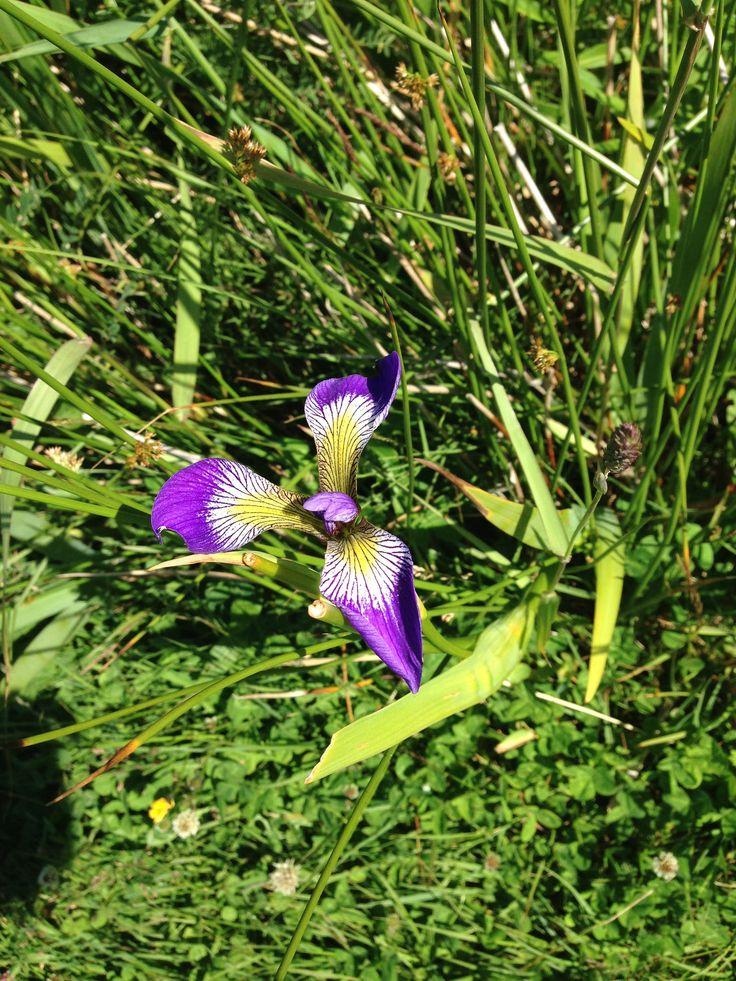 Flowers in St John's, Newfoundland  #ExploreNL, #ExploreCanada, #VisitNewfoundland, #wwwYYT  https://flic.kr/p/xFsJPS | wg_P2015-08-04 14.55.36 |
