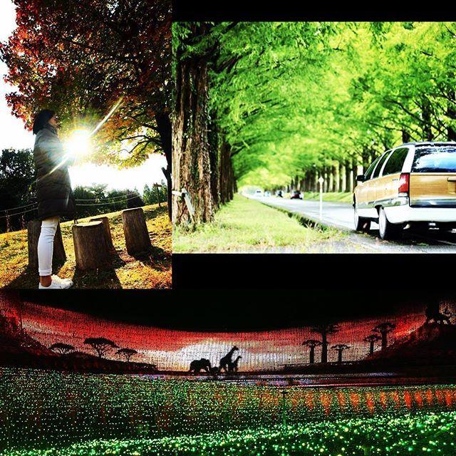 【1984yukiii】さんのInstagramをピンしています。 《#滋賀県#マキノ高原#山#森 #メタセコイア並木#並木#tree #ロードマスター#ローマス #car#車#散歩#ドライブ#drive #三重県#長島#なばなの里 #イルミネーション#LED #デート#date#仲良し #夫婦#パートナー#partner》