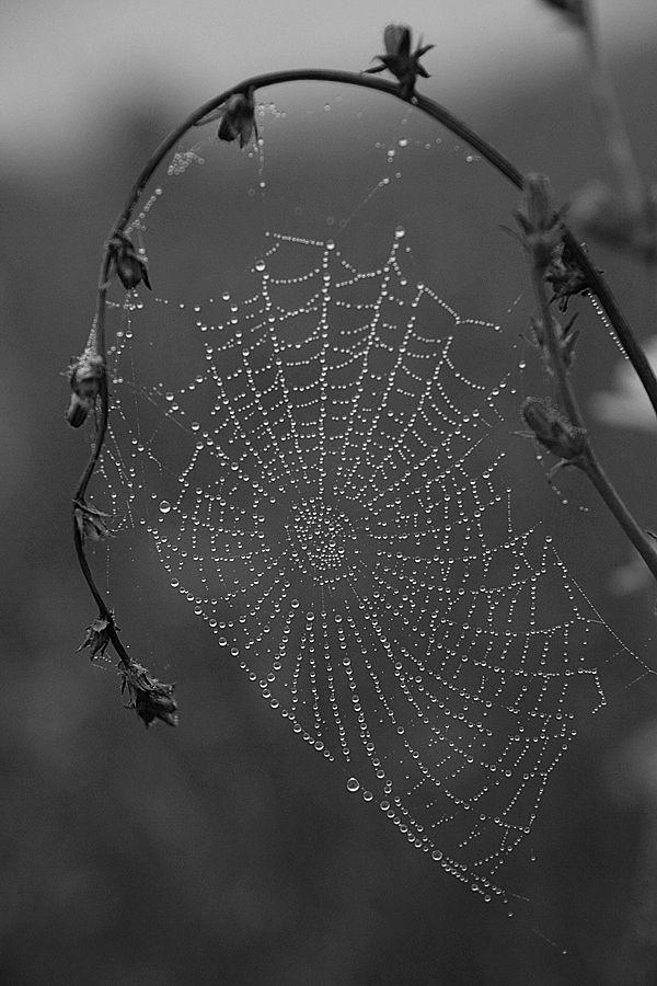 (¿Culpable?) Nuestra mente es una telaraña de absurdos, entrelazandose para coger densidad y atrapados en la infelicidad como una mosca...