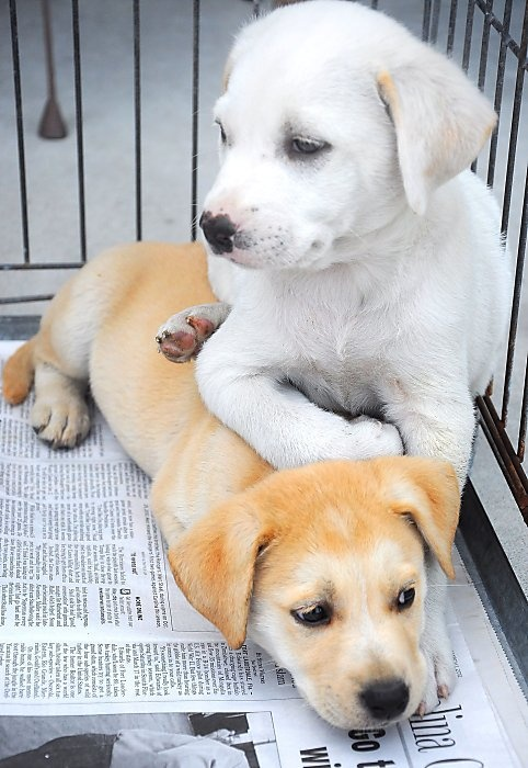 All little brothers must get noogies: Sammy gets the better of brother Bobby at an SPCA adoption drive outside Kinston, N.C.