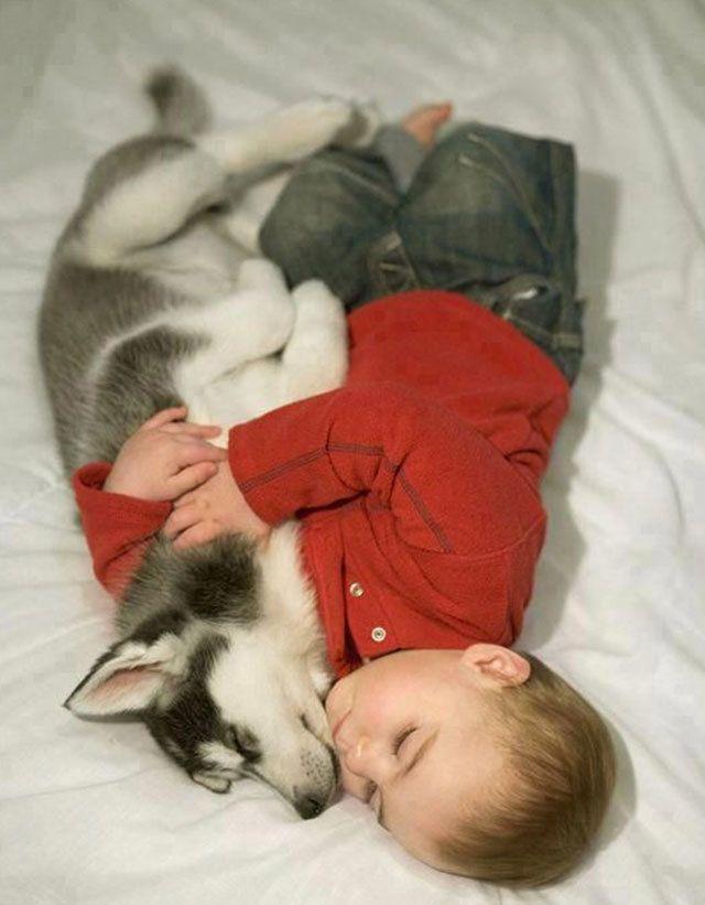 De Meest schattige foto's van honden en baby's   MiniMe.nl