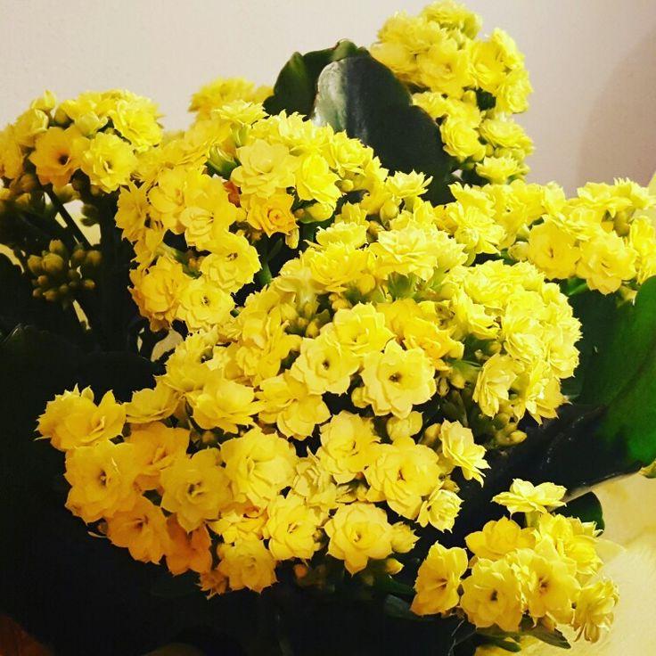#fiori sbocciano anche in #autunno