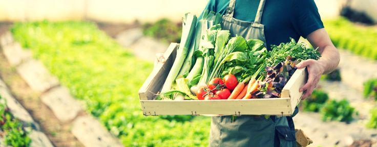 Safina Jaya, distribusi dan retail produk pupuk organik, pestisida organik untuk kebutuhan taman dan kebun rumah atau kantor