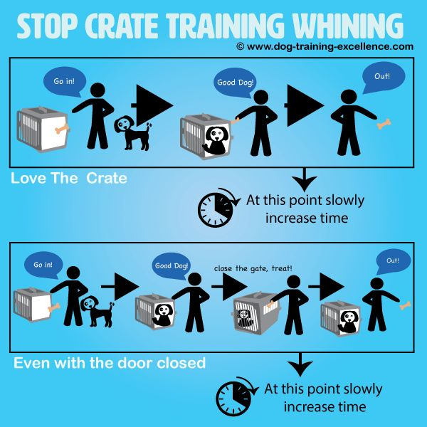 Stop Crate Training Whining