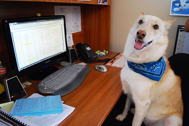Its up to Holly to keep her co-workers cheerful and productive at work.