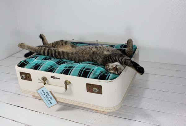 Лежанка для кошки своими руками из старого чемодана или коробки телевизора. Фотографии кошачьих лежанок. Как сделать своими руками, советы.