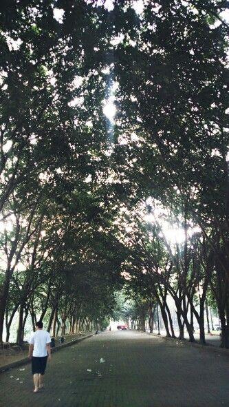 Cemara asri, medan Sumatera Utara