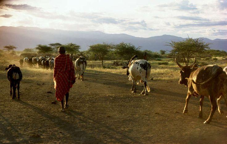 Masai Al dertig jaar maken Carol Beckwith en Angela Fisher fotorapportages over Afrikaanse stammen. Survival International creëerde samen met hen een uniek fotoverslag over de levenswijze van de Masaï.