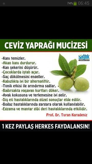 Ceviz yaprağının faydaları