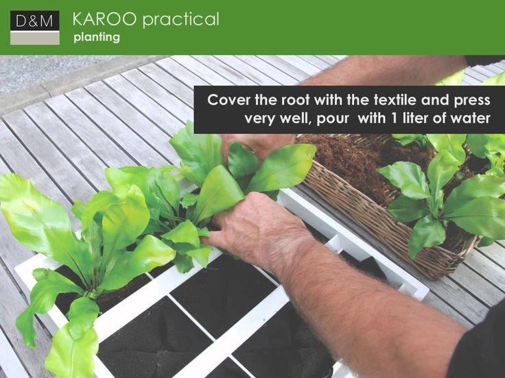 Zapraszamy do obejrzenia prezentacji Zielonych Ścian KAROO  www.zielonekaskady.pl