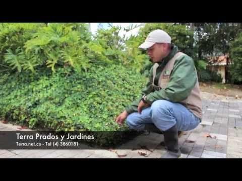 Proteger los suelos de los jardines - Terra Prados y Jardines. Proteger los jardines con una cobertura de plantas, ayuda a cuidar el suelo del sol y a mantener la humedad  www.terra.net.co  Música Last.fm - Josh Woodward - East Side Bar  Tel: (4) 3860181 • Fax: (4) 3861916 • Cel: 315 5862813 Vía las Palmas, Km 17, Centro Comercial Indiana, Of 226. Envigado, Colombia