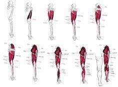 팔, 다리 근육 해부학 자료입니다. : 네이버 카페