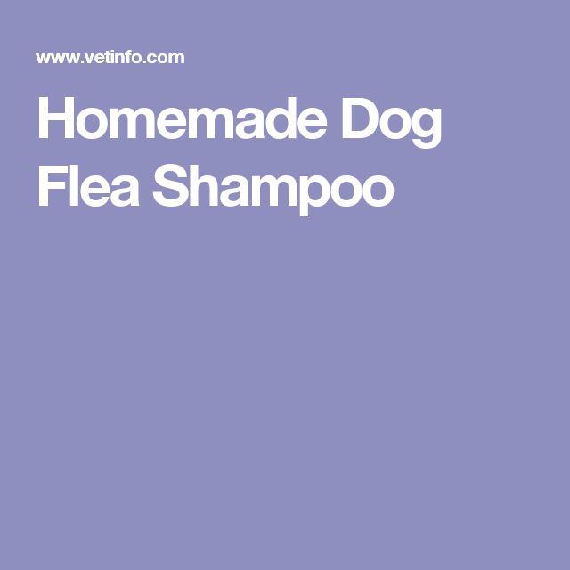 Homemade Dog Flea Shampoo