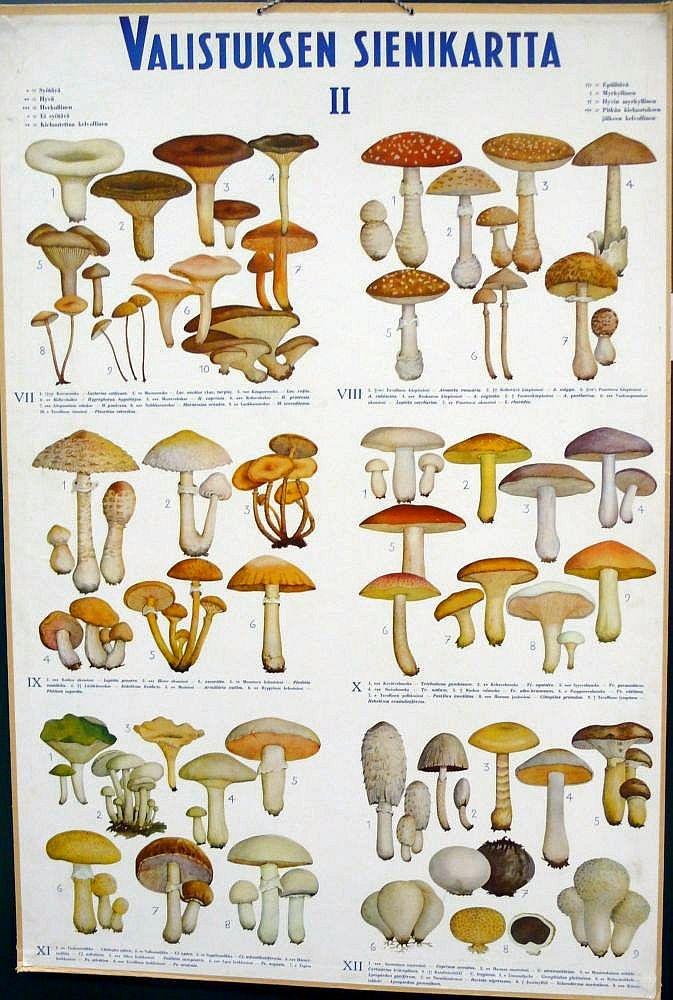 Opetustaulu, Valistuksen sienikartta II