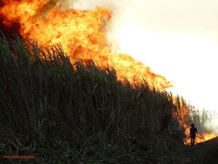 Burning the sugar cane during the crushing season. #visitburdekin #alivewithcuriosity