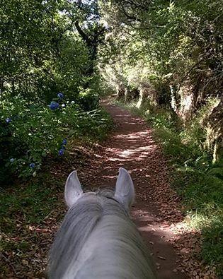 Enjoying the #Levada #natural #Air-Conditioning #Madeira #horse #paradise