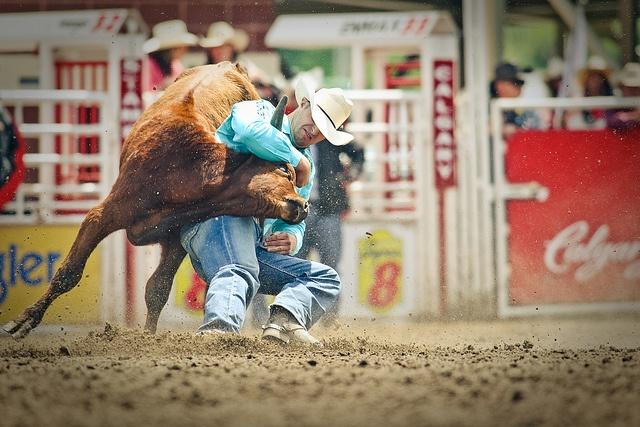 Best 17 Steer Wrestling Images On Pinterest Rodeo Rodeo