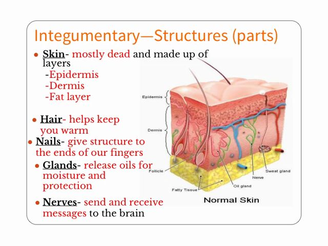 30 best images about anatomy integumentary system on