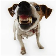 #EH It's World Rabies Day--Rabies is an infectious, viral disease that affects the nervous system of humans and other mammals. There is no treatment for rabies after symptoms of the disease appear. Diagnosis of the disease is confirmed when brain tissue is tested after death. We have tips on avoiding dog bits on our Website.