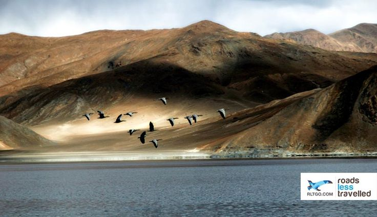 Birds at pangong